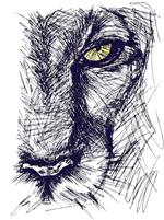 cougar pencil drawing